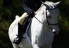 dressage Obraz Royalty Free
