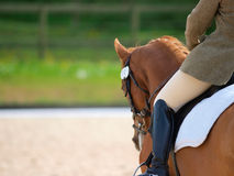 Dressage Abstract. A close up of the side of a horse and rider during a dressage movement shot with a shallow depth of field royalty free stock photography