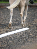 Dressage Abstract Stock Image