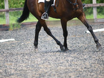 Dressage Abstract Stock Photography
