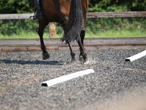 Dressage Abstract Royalty Free Stock Images
