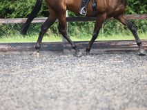 Dressage Abstract Stock Photo