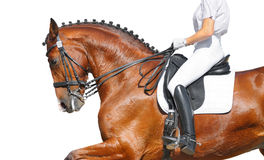Dressage - bay horse Royalty Free Stock Photo