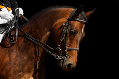 Dressage, bay horse. Isolated on black Royalty Free Stock Photography