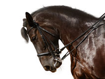 Dressage, black horse. Isolated on white Stock Photo