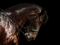 Dressage, black horse. Isolated on black Royalty Free Stock Photo
