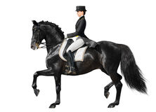 Dressage - black horse and woman. Equestrian sport - dressage (isolated on white Royalty Free Stock Image