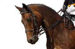 Dressage, caballo de bahía Fotos de archivo