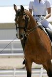 Dressage/cavaleiro equestre #1 Fotografia de Stock Royalty Free
