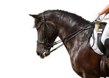 Dressage, cheval noir Photographie stock