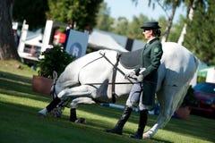Dressage classico dello stallion di Lipizzan Fotografie Stock Libere da Diritti