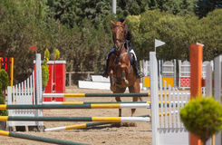 Dressage competitions Royalty Free Stock Photos