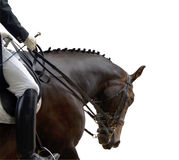 Dressage Competitor Stock Images