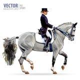 Dressage, das Pferdenspringen und Polopferde und -mitfahrer vector Schattenbilder Reiterinjockey im einheitlichen Reitpferd drauß vektor abbildung