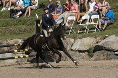Dressage, das Pferdenspringen und Polopferde und -mitfahrer vector Schattenbilder Stockfoto