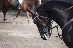 Dressage de cheval image libre de droits
