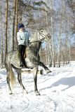 Dressage del caballo de la muchacha Fotografía de archivo libre de regalías