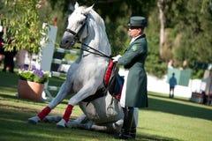 Dressage dello stallion di Lipizzan durante l'esposizione pubblica Fotografia Stock
