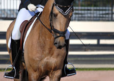Dressage. Detail of a buckskin colored horse and rider completing dressage moves in an arena stock images