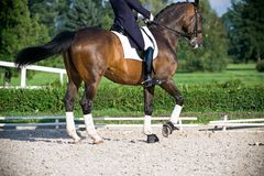 Dressage do cavalo Imagem de Stock Royalty Free