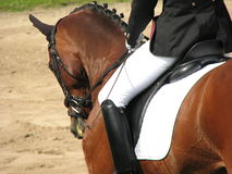 Dressage elegance. Dressage rider and her horse all set to go in the ring royalty free stock images