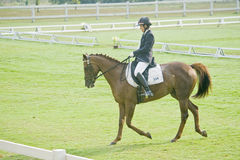 Dressage equestre Fotografia de Stock