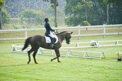 Dressage equestre Imagens de Stock Royalty Free