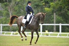 Dressage equestre Fotografia Stock