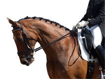 Dressage Event. Dressage horse isolated with clipping path stock photos