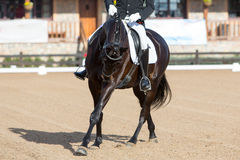 Dressage Exhibition in Spain. Beautiful Spanish horse in classical dressage exhibion Stock Photography