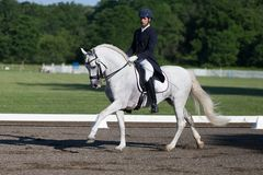 Dressage FEI Prix St. Georges Stock Image