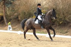 Dressage - Filip Minarik Royalty Free Stock Photos