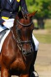 Dressage horse Royalty Free Stock Photos