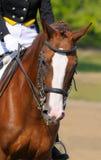 Dressage horse Stock Photos