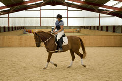 Dressage Horse Stock Photography