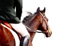 Dressage horse Royalty Free Stock Image