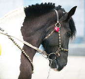 Dressage horse Stock Photo