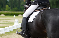 Dressage horse. And a rider Royalty Free Stock Photo