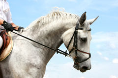 Dressage horse Stock Images