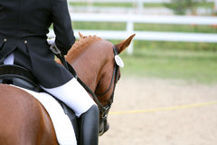 Dressage horse. In snaffle with rider's leg royalty free stock photos