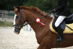 Dressage horse canter with winner ribbon Stock Photography