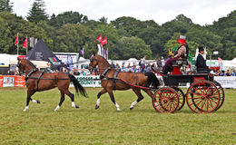 Dressage horse and carriage Stock Photography