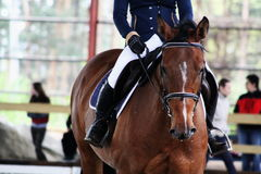 Dressage. Horse on dressage competition with rider Stock Photos