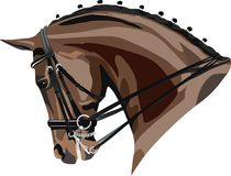 Dressage horse head. Vector illustration of a dressage horse head colour Royalty Free Stock Images