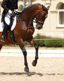 Dressage horse royalty free stock photo