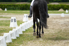Dressage horse Royalty Free Stock Images