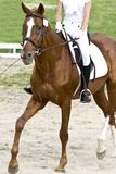 Dressage horse. Dressage of horse and rider Royalty Free Stock Photos