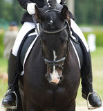 Dressage horse. And a rider stock image