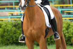 Dressage horse. And a rider Stock Photo