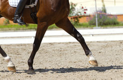 Dressage horse. And a rider Royalty Free Stock Images